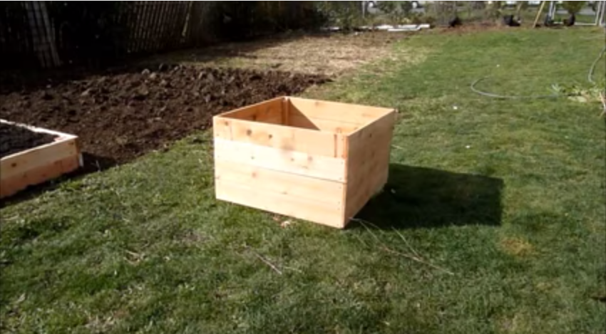 how to grow potatoes in a box