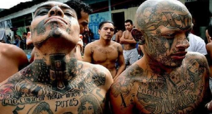 """CNN Sympathizes with MS-13 Gang Members: """"Trump Makes Us Stronger"""""""