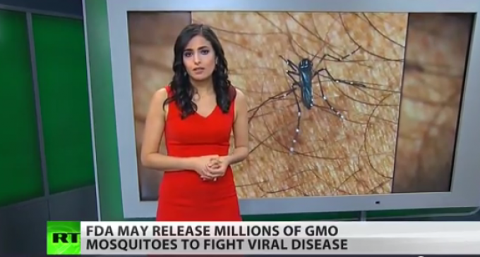 Millions Of GMO Mosquitos To Be Set Loose In Florida?