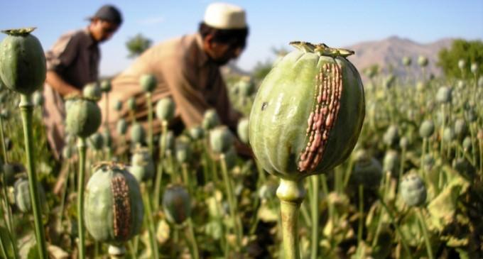 ISIS Burning Down Opium Fields In Afghanistan