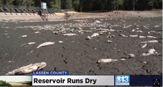 CA Reservoir Dried Up Overnight? That Smells Fishy!