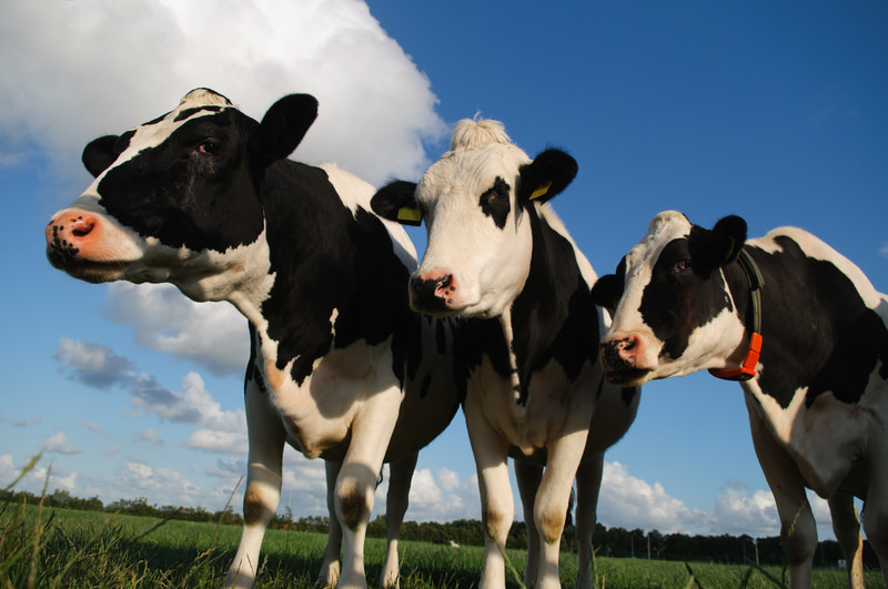 "Florida Department Of Agriculture Demands Family Run Dairy Farm Label Milk ""Imitation"""