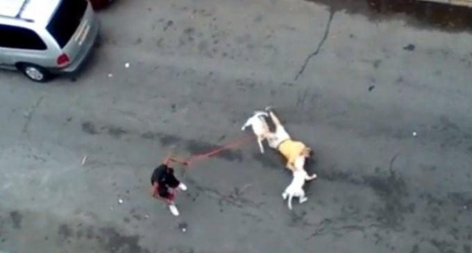 Shock Video: Woman Orders Pitbulls to Attack Man