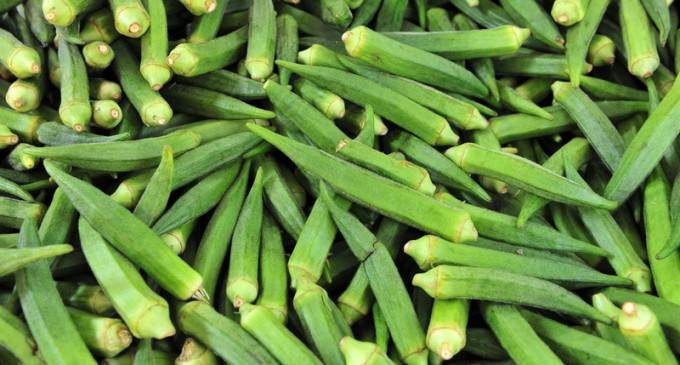 Heavily Armed Police Storm Home, Seize Okra Plants
