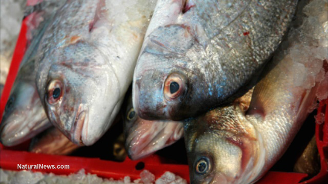 Massive bloody tumors turning up more frequently in for What fish has the most mercury