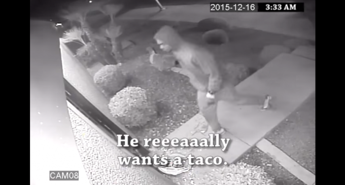 Mexican Restaurant Releases Video of 'Taco Burglars' Breaking Into Their Store