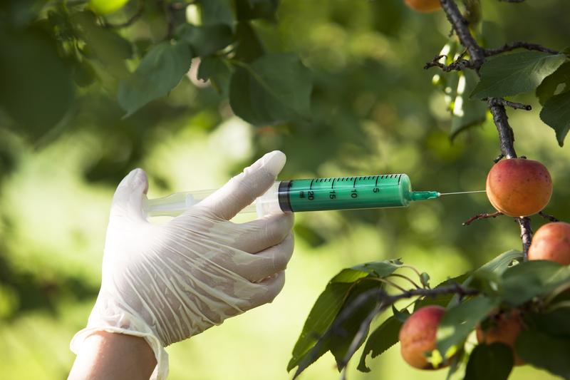 Federal Judge Overturns Hawaii Ordinance Banning GMOs