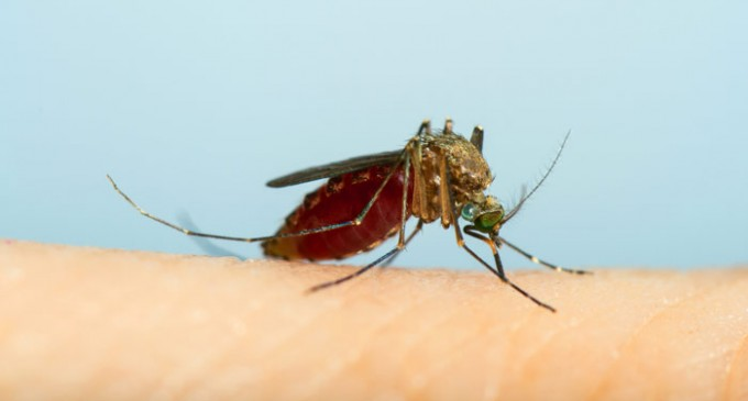 Make a Pesticide-Free Mosquito Trap