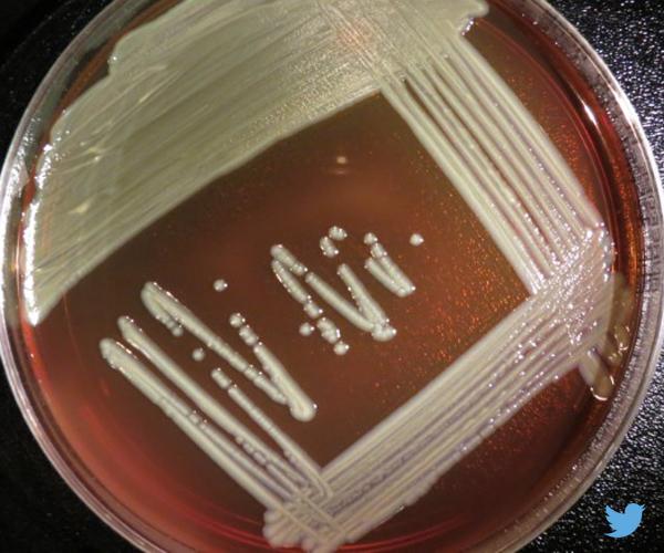 virulent strain bacteria
