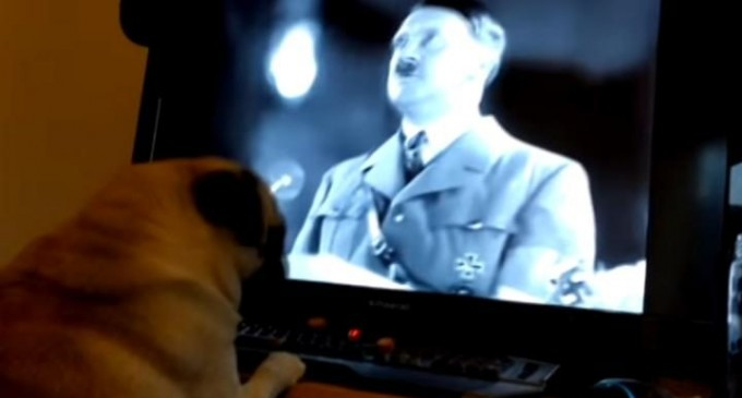 Scottish Man Arrested for 'Nazi Pug' Prank Video Posted to YouTube