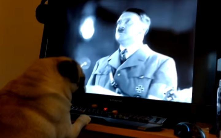 nazi pug