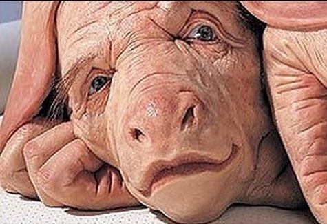 pig_human_