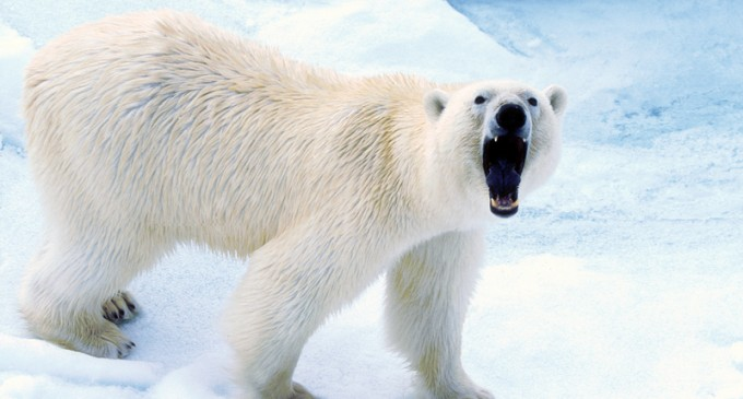 The Big Con: '97 percent of scientists believe in global warming'
