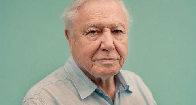 David Attenborough: Humans are plague on Earth