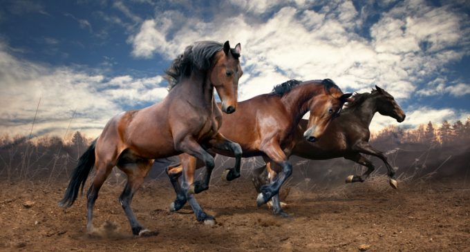 Obama Admin Decides to Euthanize 45,000 Wild Horses