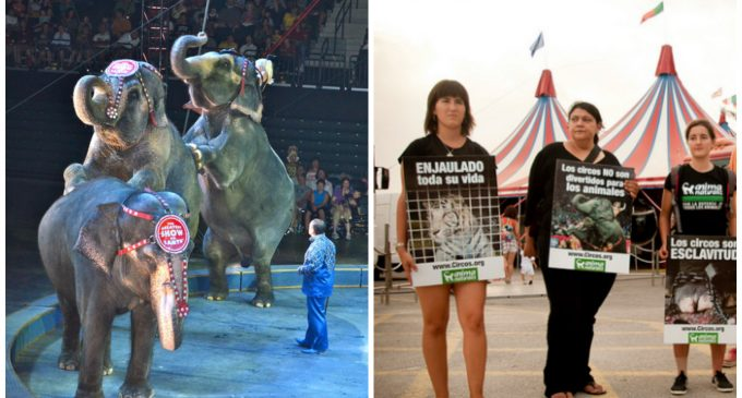PETA Wins: Ringling Bros. Circus Closes After Nearly 150 Years