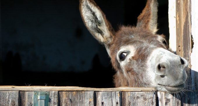 15 Moroccan Teenagers Get Infected with Rabies After Raping a Donkey