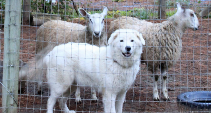 "Oregon Court Orders Owners to Surgically ""Debark"" Dogs"