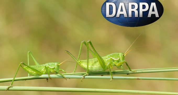 Scientists Sound Alarm Over DARPA Bioweapon Utilizing Insects