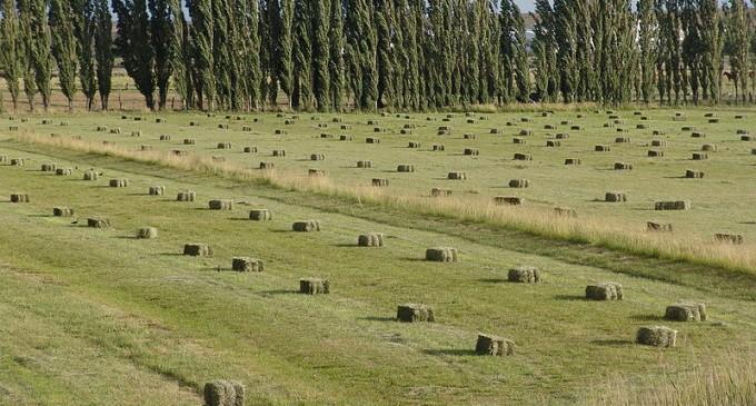 GMO contamination blamed for rejected Washington alfalfa crop