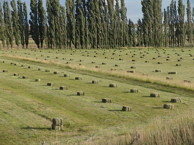 800px-Fardos-alfalfa
