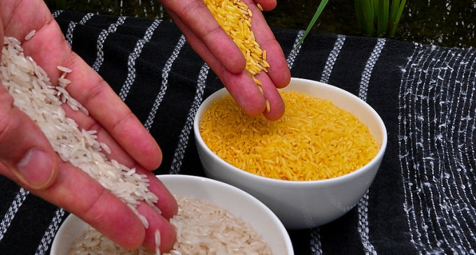 Golden Rice: Trojan Horse or Lifesaver?