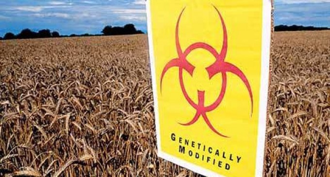 Big Win for GMO Food Labeling -CORRECTION