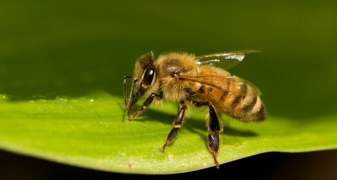 Dept. of Agriculture Illegally Seizes Bees, Destroys 15 Years of Research