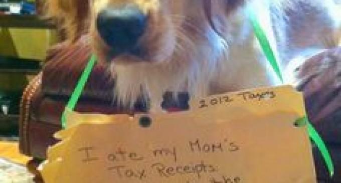 "Rep. Steve Stockman Bill: ""The Dog Ate My Tax Receipts Resolution"""